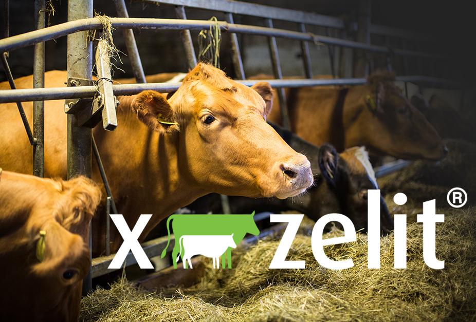 X-Zelit  |  Betri undirbúningur fyrir burð